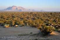 Rosamond, Mojave-Tropico