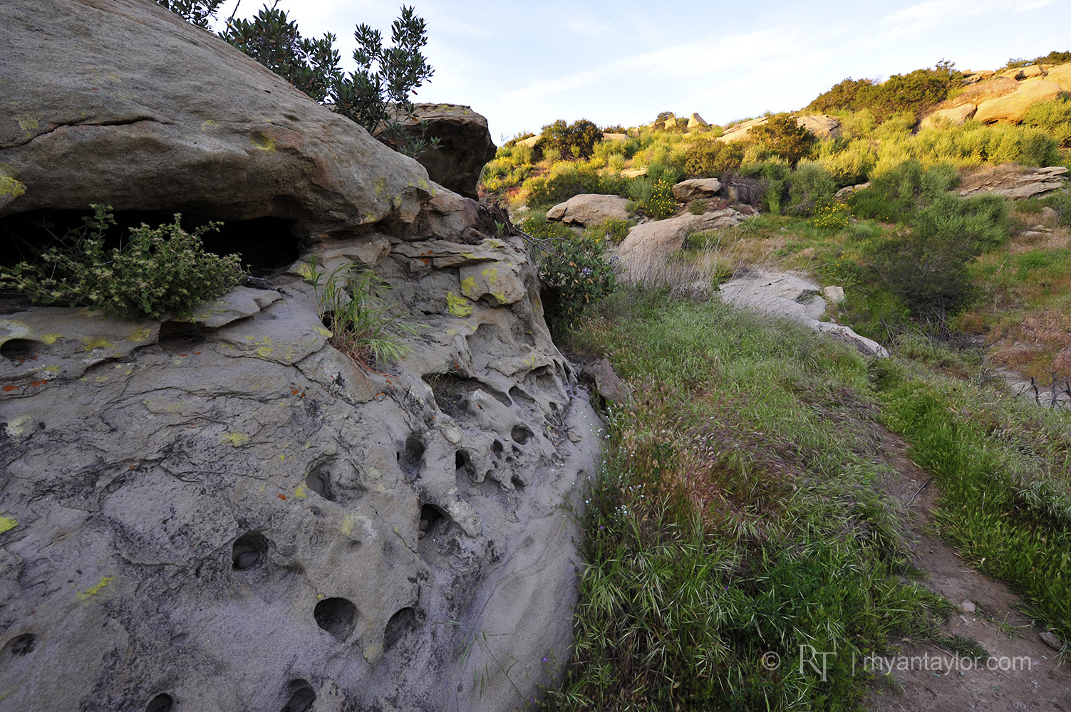 Hummingbird Trail
